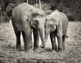 elephant award